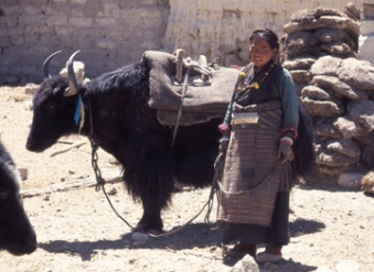 Tibetan woman with Yak