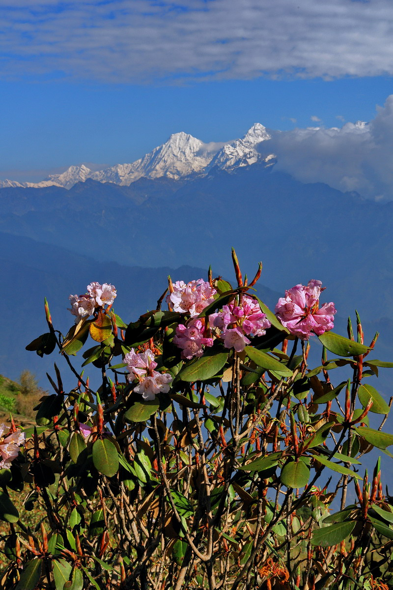 Beauty of Nepal during spring