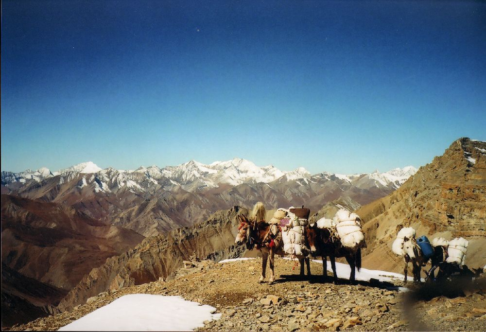 The sun is bright, let us rest for a while - yaks in Dolpo Trek