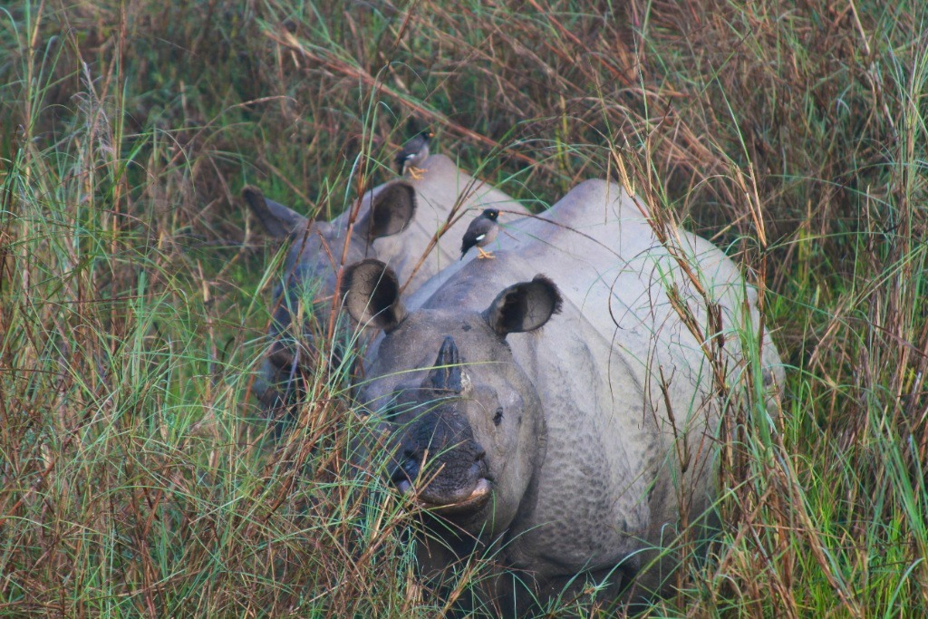 Visit Nepal 2020 One Horned Rhino in Nepal