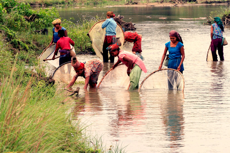 tharu fishing culture