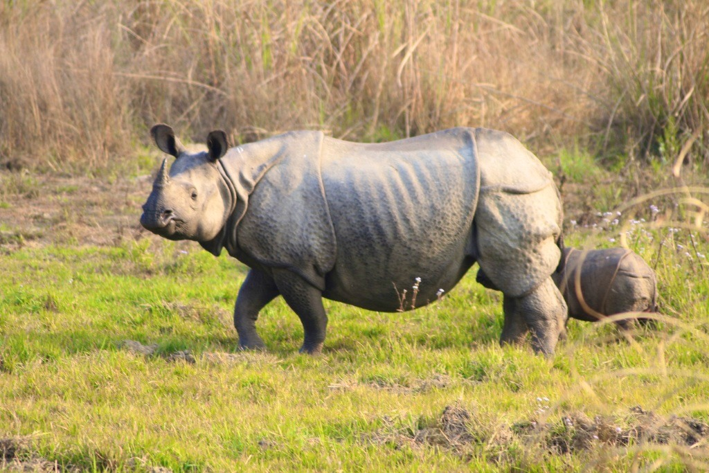 Rhino-Chitwan-National-Park