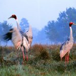 12th Bird Festival at Koshi Tappu Wildlife Reserve