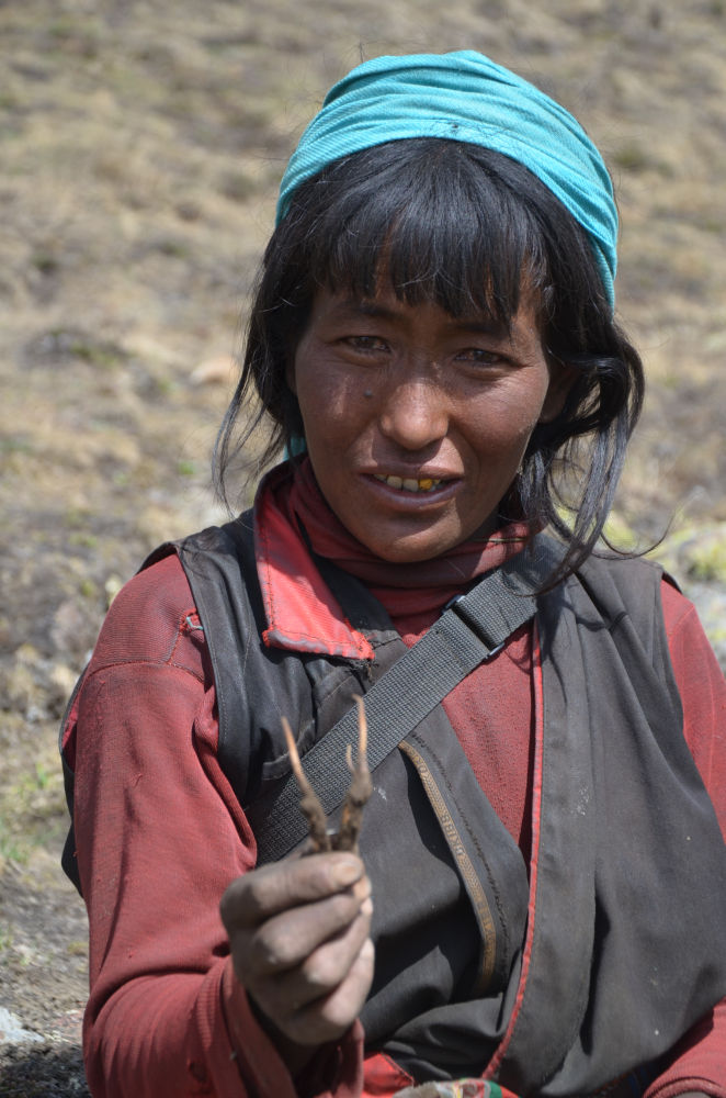 Lucky lady to find the Yarsa- a medicinal plant found in Highland Himalayas