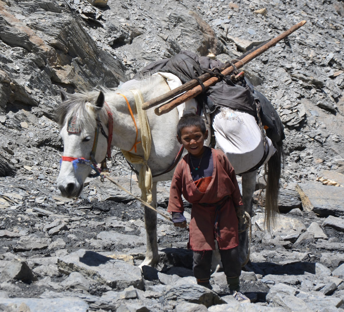 Kid's effort to support the family - Dolpo kid with donkey