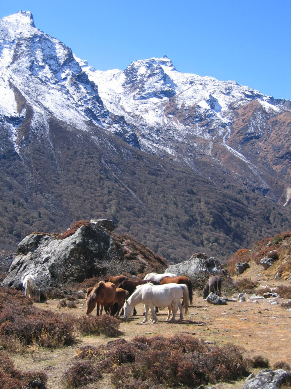 Highland rides! I wish I had one - at Langtang trek