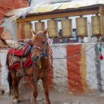 Upper Mustang Horse Riding Trip