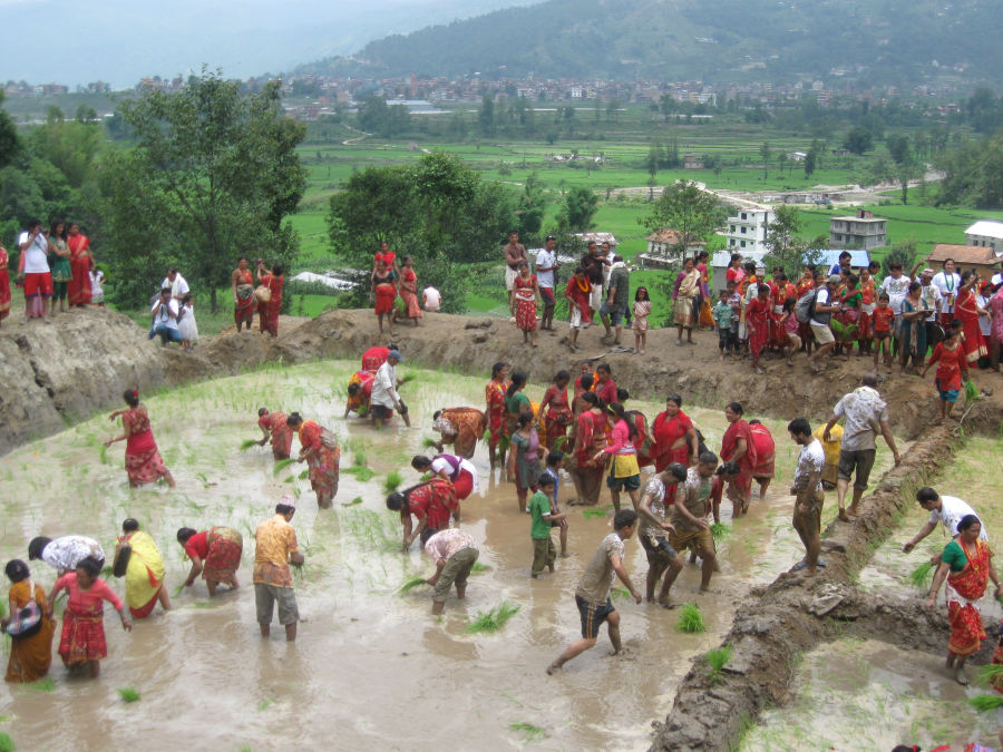 We work hard to feed the nation - Nepal is agriculture dependent country so farmers' festival is a big part