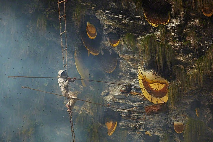 Visit Nepal in 2020 Honey Hunter at Work (pic credit: The Guardian) https://webinfotech.com.np/