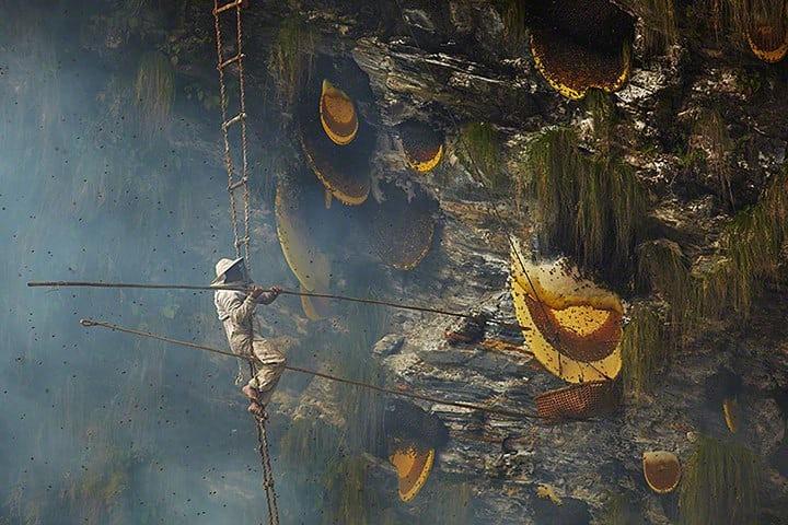 Honey Hunter at Work (pic credit: The Guardian)