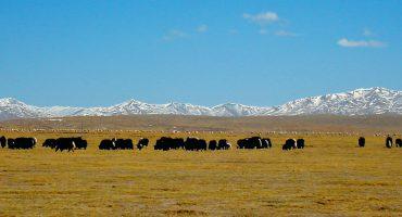 Tibet Beijing Lhasa train tour