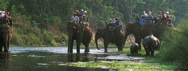 Wildlife Safari in Nepal